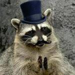 the_raccoon_GOD